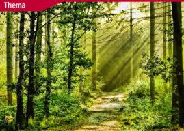Der Wald im Klimawandel