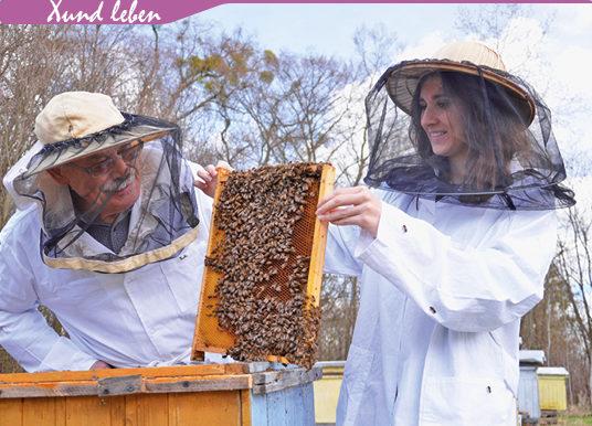 Honig: Heilkraft aus dem Bienenstock